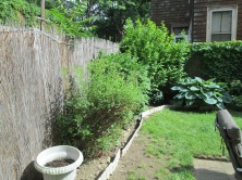 Garden after pruning & clean up