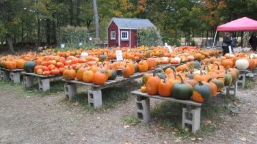 pumpkins-in-ipswich