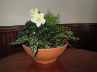 Winter plants terra cotta pot arrangement 12.14