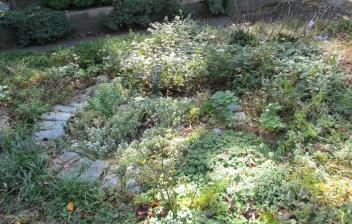 weedy garden bed